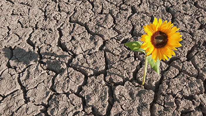 news-ashridge-resilience-702x395